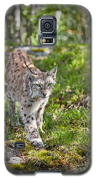 Galaxy S5 Case featuring the photograph Approaching Lynx by Yngve Alexandersson