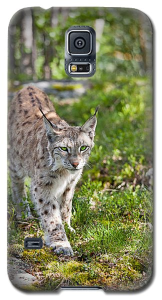 Approaching Lynx Galaxy S5 Case