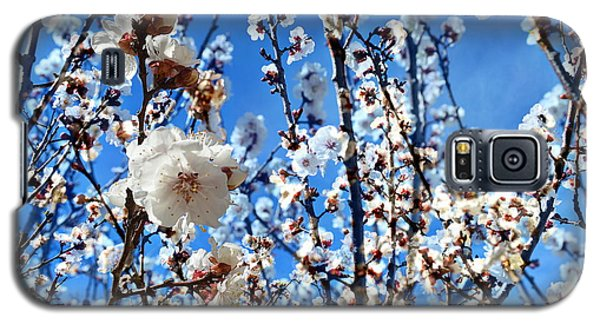 Galaxy S5 Case featuring the photograph Apricot Blossoms by Glenn McCarthy Art and Photography