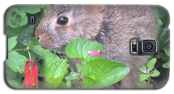 Galaxy S5 Case featuring the photograph April Rabbit And Columbine by Peg Toliver