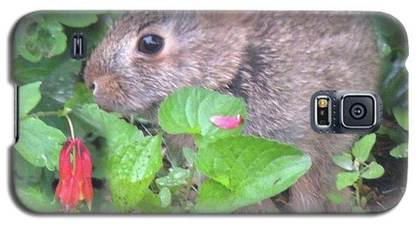 April Rabbit And Columbine Galaxy S5 Case