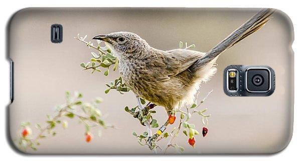 Arabian Babbler Galaxy S5 Case