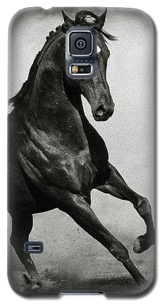 Arabian Horse Galaxy S5 Case