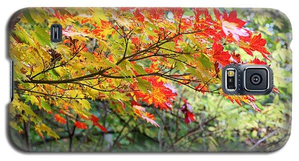 Arboretum Autumn Leaves Galaxy S5 Case