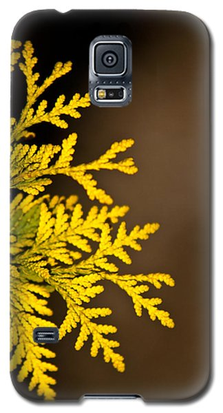 Arbovitae 1 Galaxy S5 Case