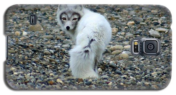 Arctic Fox Galaxy S5 Case