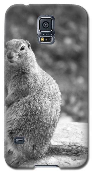 Arctic Ground Squirrel Galaxy S5 Case