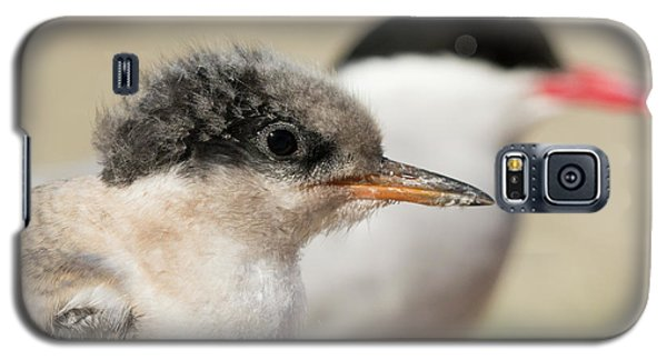 Arctic Tern Chick With Parent - Scotland Galaxy S5 Case