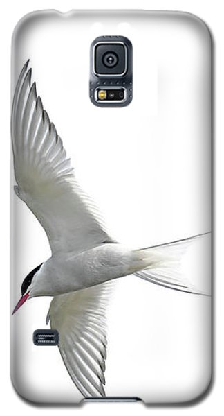 Arctic Tern Flying In Mist Galaxy S5 Case