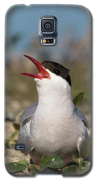 Arctic Tern - St John's Pool, Scotland Galaxy S5 Case