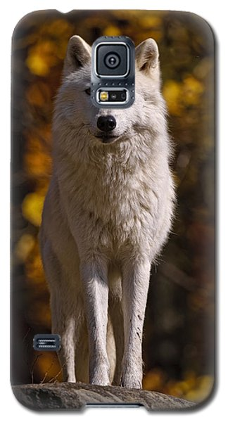 Galaxy S5 Case featuring the photograph Arctic Wolf On Rocks by Michael Cummings