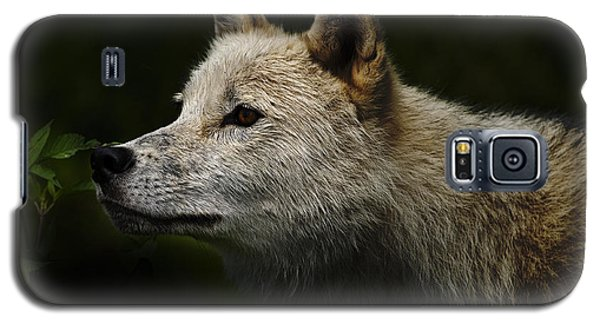Galaxy S5 Case featuring the photograph Arctic Wolf Portrait by Michael Cummings