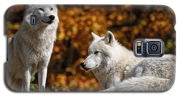 Galaxy S5 Case featuring the photograph Arctic Wolves On Rocks by Michael Cummings