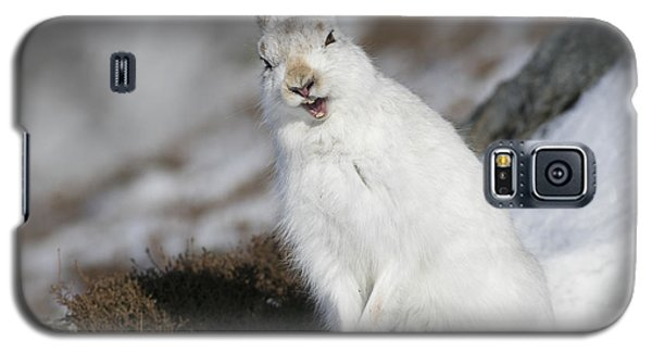 Are You Kidding? - Mountain Hare #14 Galaxy S5 Case