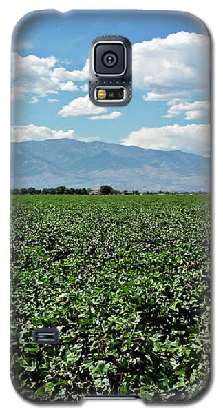 Arizona Cotton Field Galaxy S5 Case by Methune Hively