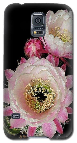 Arizona Desert Cactus Flowers Galaxy S5 Case