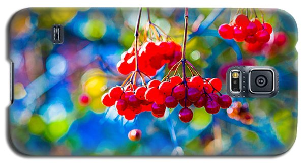 Galaxy S5 Case featuring the photograph Arrowwood Berries Abstract by Alexander Senin