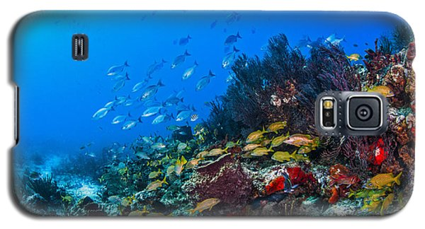 Art By Nature Galaxy S5 Case