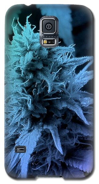 Artful Oasis Macro Abstract 112216.5 Galaxy S5 Case