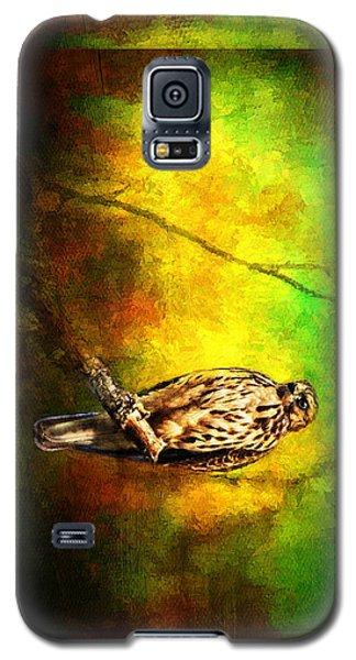 Hawk On Branch Galaxy S5 Case