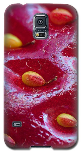 Galaxy S5 Case featuring the photograph Strawberry Fields by Alexey Kljatov