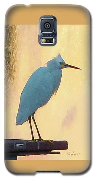 Birds And Fun At Butler Park Austin - Birds 3 Detail Macro Galaxy S5 Case by Felipe Adan Lerma