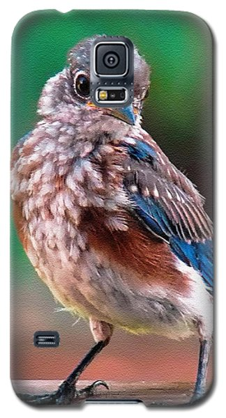 I'm New Around Here Galaxy S5 Case by Sue Melvin