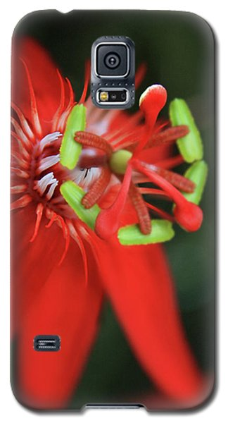 Galaxy S5 Case featuring the photograph Passiflora Vitifolia Scarlet Red Passion Flower by Sharon Mau