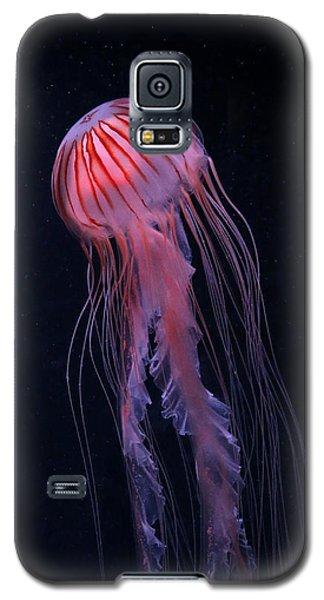 Strawberry Jelly Galaxy S5 Case
