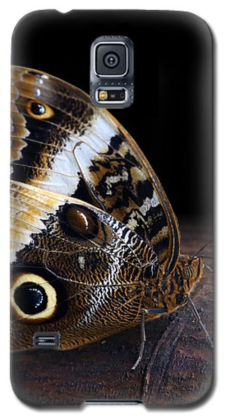 Yellow-edged Giant Owl Butterfly Galaxy S5 Case