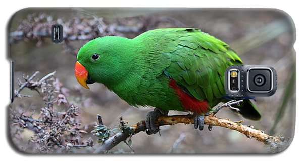 Green Male Eclectus Parrot Galaxy S5 Case