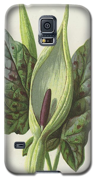 Arum, Cuckoo Pint Galaxy S5 Case