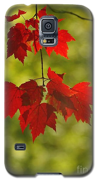 Galaxy S5 Case featuring the photograph As Red As They Can Be by Aimelle