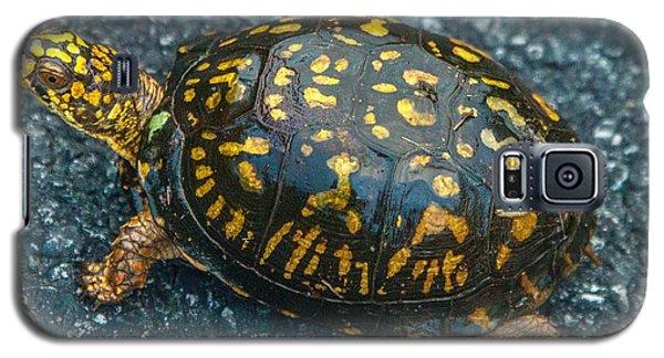Turtle Galaxy S5 Case