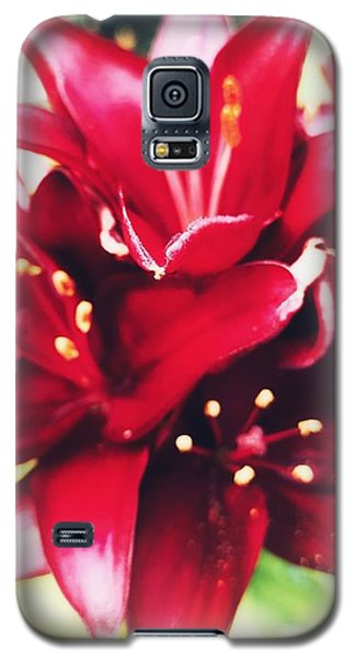 Asiatic Lilies Galaxy S5 Case