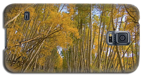 Galaxy S5 Case featuring the photograph Aspen Alley by Steve Stuller