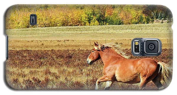 Aspen And Horsepower Galaxy S5 Case
