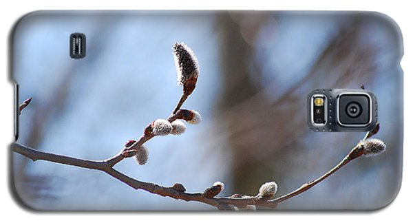 Galaxy S5 Case featuring the photograph Aspen Catkins 20120314_33a by Tina Hopkins