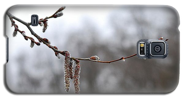 Galaxy S5 Case featuring the photograph Aspen Catkins 20120316_15a by Tina Hopkins