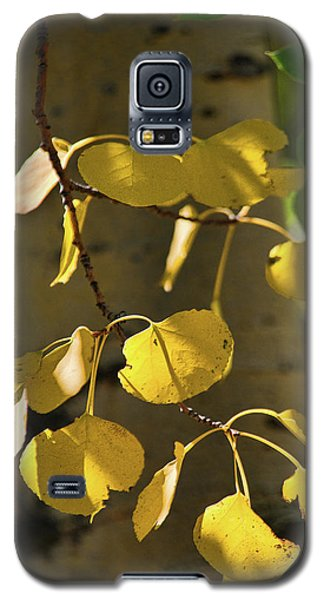 Aspen Closeup Galaxy S5 Case