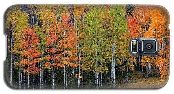 Aspen Color Galaxy S5 Case