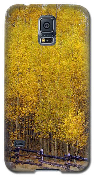 Aspen Fall 2 Galaxy S5 Case