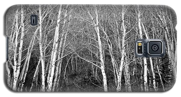 Aspen Forest Black And White Print Galaxy S5 Case