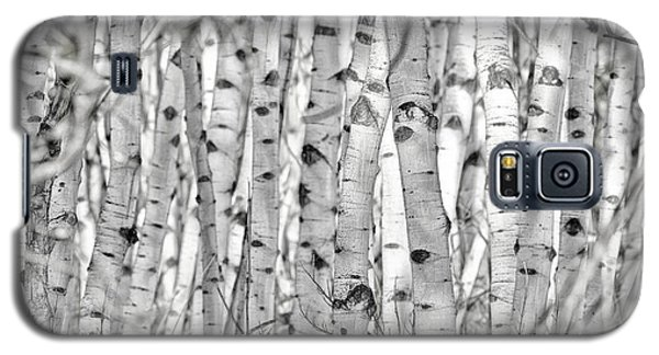 Aspen Forest Iv Galaxy S5 Case