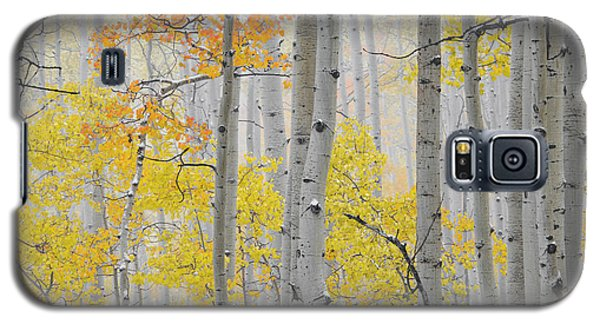 Aspen Forest Texture Galaxy S5 Case