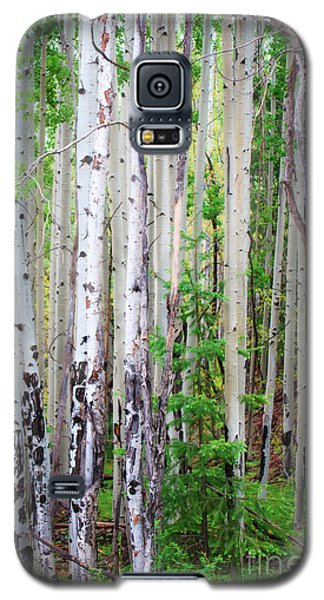 Galaxy S5 Case featuring the photograph Aspen Grove In The White Mountains by Donna Greene