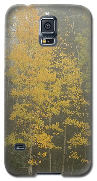 Aspen In The Fog Galaxy S5 Case