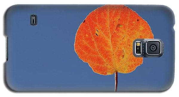 Aspen Leaf 1 Galaxy S5 Case by Marie Leslie