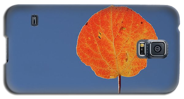 Galaxy S5 Case featuring the photograph Aspen Leaf 1 by Marie Leslie