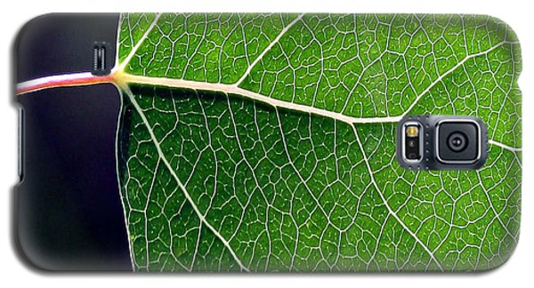 Aspen Leaf Veins Galaxy S5 Case